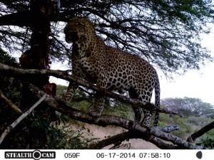 Leopard Page